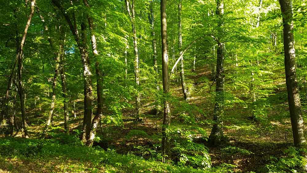 Priroda Fruška Gora